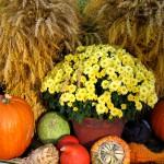 A Thanksgiving Hymn